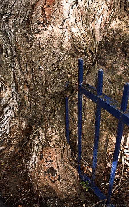 20131103-4-TreeTrunk